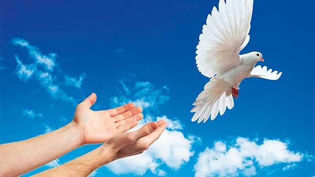 Mensaje de paz
