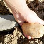 patata para hacer plástico biodegradable