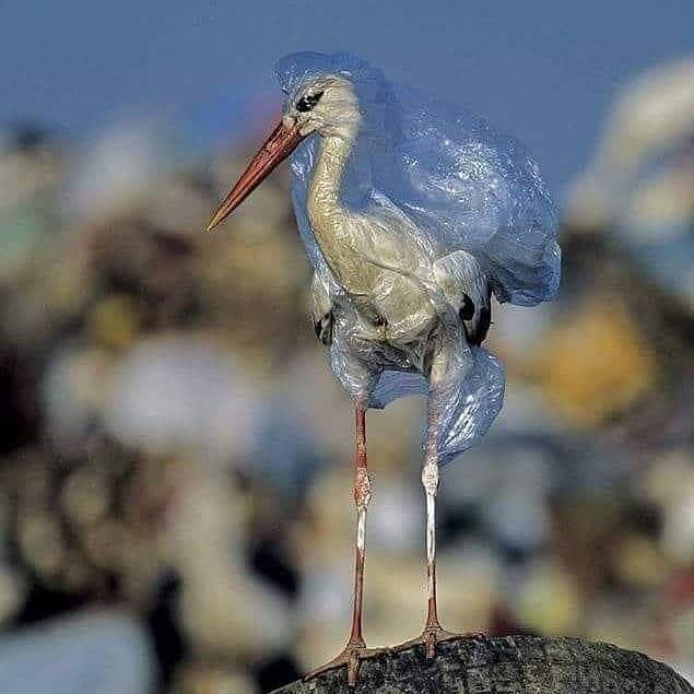 plástico contaminando el ambiente