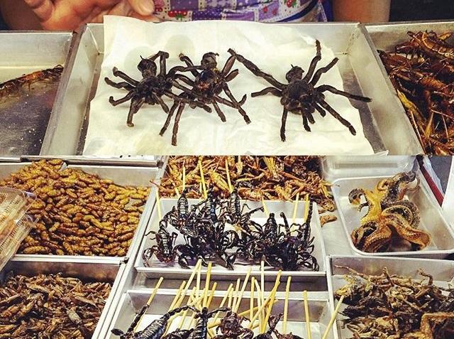 arañas y gusanos para comer