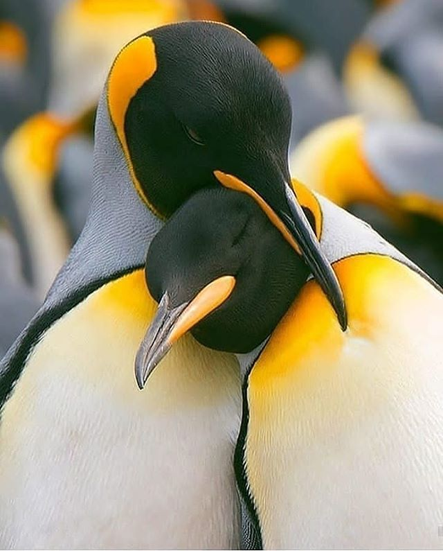 monogamia animal