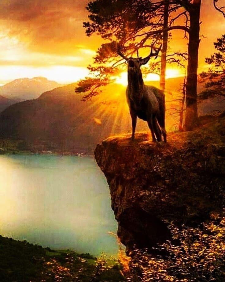 Mito de Narciso, caza del ciervo