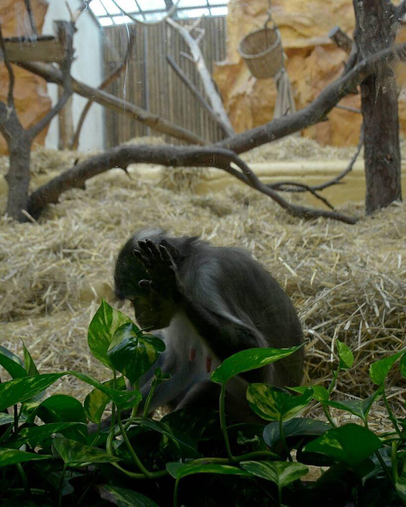 trastornos mentales en los animales